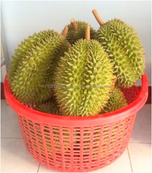 FRESH DURIAN FRUIT FOR SALE (Ms. Holiday)