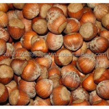 roasted hazelnut, Cobnut/Dry Hazelnuts for sale