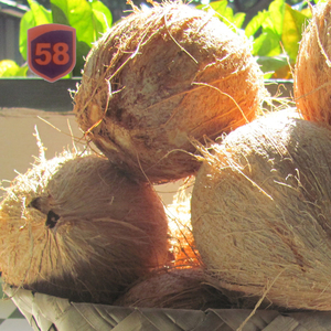 Coconut Exporters, Coconut Exporters Suppliers and