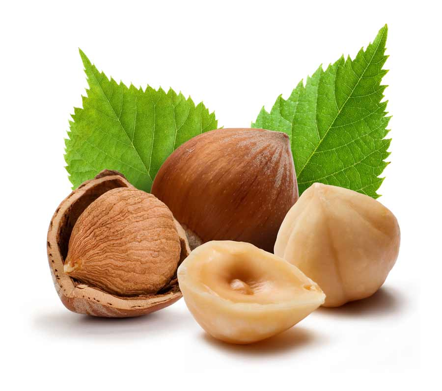 Картинка с орехами для детей