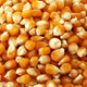 Dry Maize/Dried Yellow Corn/Dried Sweet Corn Best Price