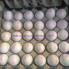 Namakkal Chicken White Egg Exporter in India/Tamilnadu