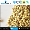 High quality organic natural coriander seeds