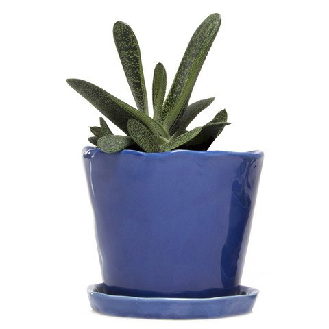 "Chive - Big Tika Succulent Planter - 5"" Ceramic Plant Pot with Drainage Hole and Saucer, Cobalt Blue"