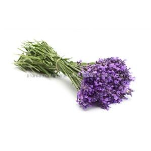 Lavender Oil Global Exporter