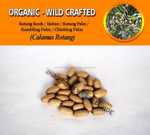Wholesale Rattan Seeds Calamus Rotang Palm Rambling Climbing Palm