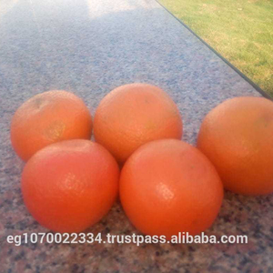 mandarin orange fruit for Malta market speed shipping