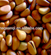 Pine Nuts For Sale Urgently/pine Nut Kernels Prices/dried/turkish/wild