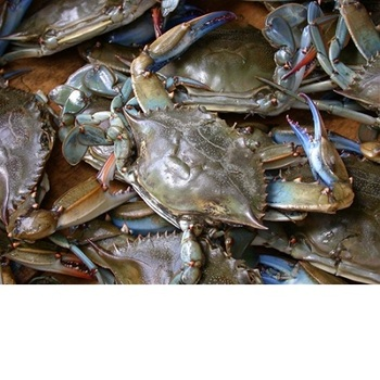 Frozen Blue Swimming Crab,Live Mud Crabs Wholesale Supplier - Buy Blue  Crabs Product on Alibaba com