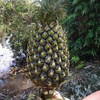 VIETNAM SWEET FRESH PINEAPPLE AT HIGH QUALITY