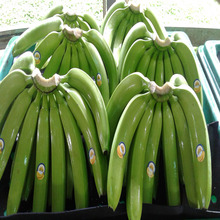 Fresh Cavendish Bananas Of Ecuador