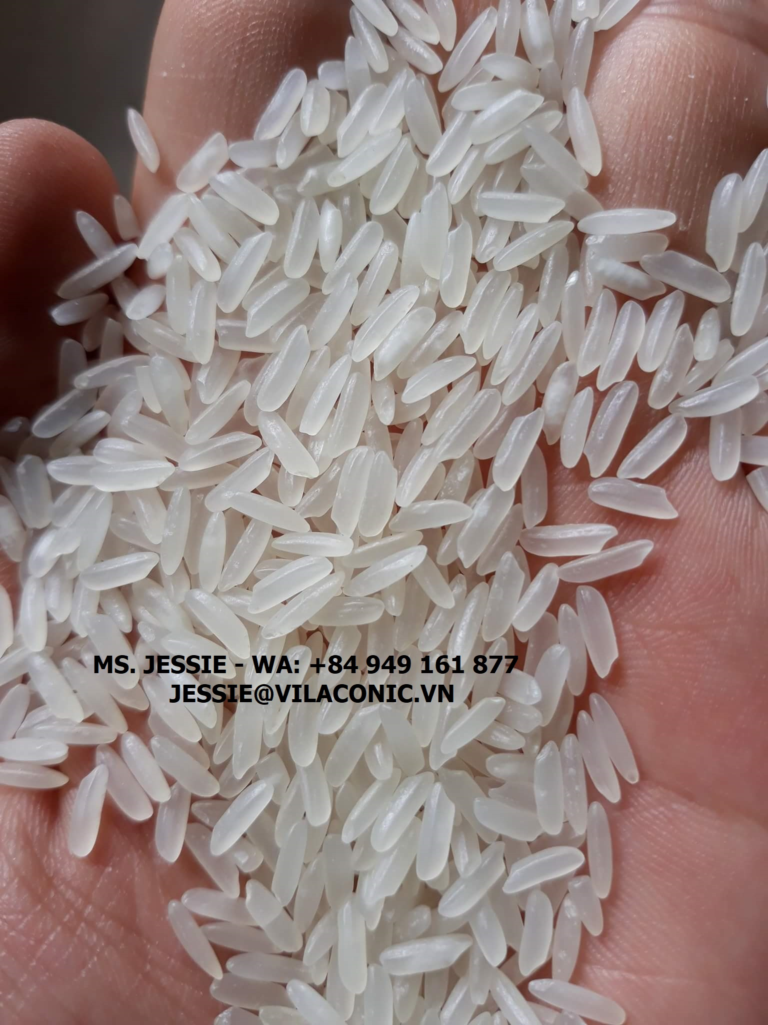 TOP MARKET CALROSE RICE - PACIFIC ISLANDS - AAA QUALITY - HOT PRICE - MS. JESSIE
