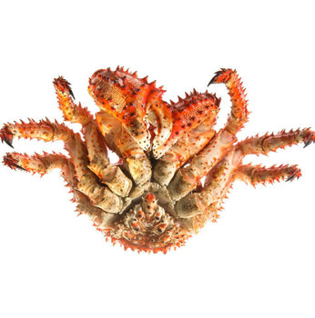 Russian King Crab, Wholesale Seafood