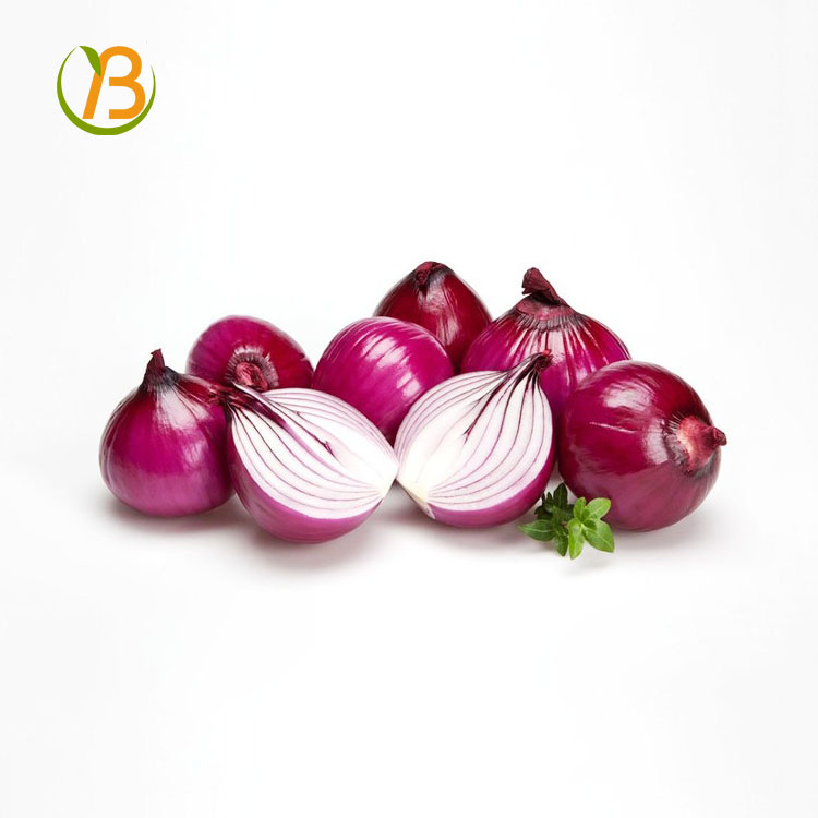 fresh bellary red onion for sale/onion in vietnam