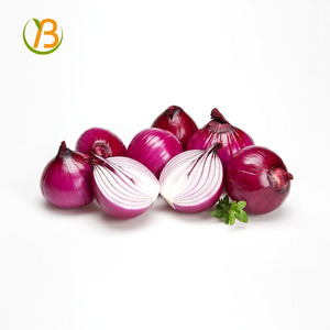 fresh bellary red onion for sale/onion importer in vietnam