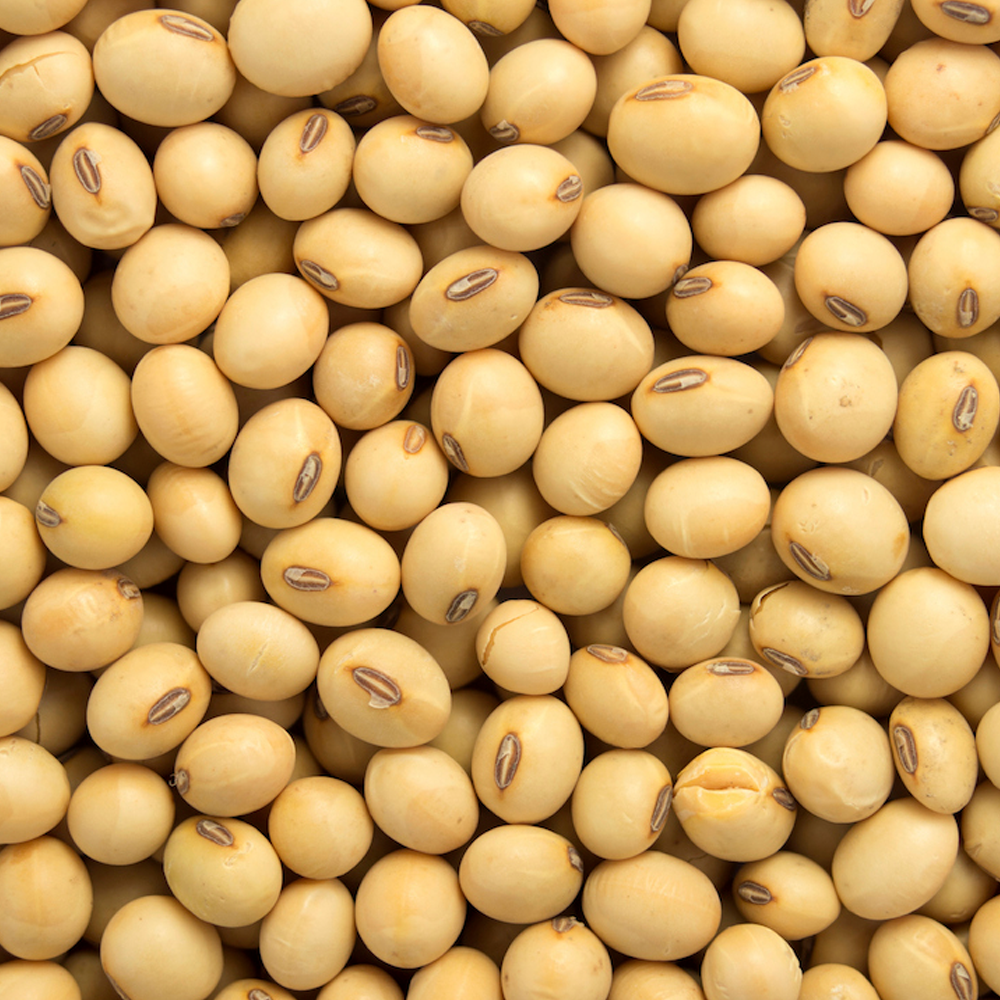 gmo and non gmo soyabean soybean for sale buy cheap soybeans for