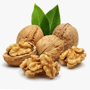 Organic nut - in shell price from 20 tons - wholesale walnut ukraine
