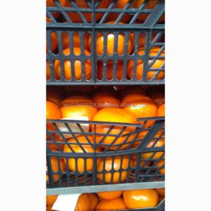 Fresh Citrus Fruits, Fresh Mandarin Oranges, Valencia Oranges & Lemons High  Quality
