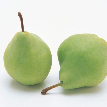 Green pear fruit pear wholesale early su pear exporter