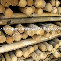 [wholesale] Bamboo raw materials - Natural Tam Vong bamboo pole solid / Cane - Dry bamboo Decor, Builders