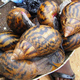 Giant live African Snails For Sale.(dried , dehydrated , Salted , Live , Fresh Frozen)