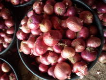Red Onion Price for Hong kong Market