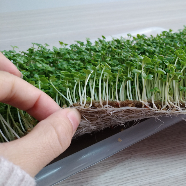 Coconut Fiber Mat/ Moisture-Absorbent Microgreens and Grass Seed Starter  Growing Media Pad Hydroponic Matting, View coco coir mat, VDELTA Product