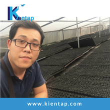 Market coconut shell cube charcoal for shisha/bbq from Kientap JSC Vietnam