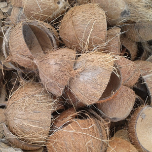 RAW COCONUT SHELL / CRUSHED COCONUT SHELL / COCONUT SHELL POWDER