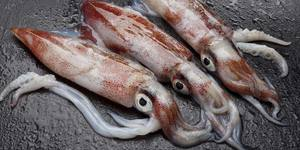 frozen squid for export with lowest price