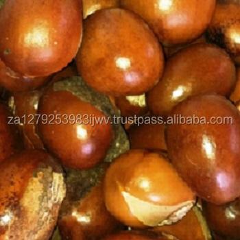 Shea Nuts,Palm Kernel Shell,Garcinia Kola - Buy Bitter Kola Nuts,Shea  Nuts,Palm Kernel Shell Product on Alibaba com