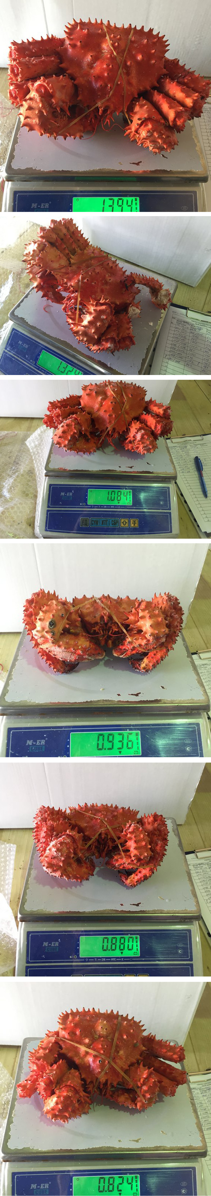 authentic Quality Frozen Red King Crab From Russia at Factory Price