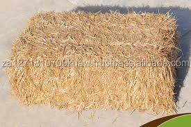 WHEAT STRAW ANIMAL FOR EXPORT