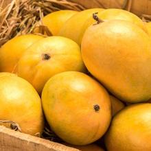 Florida Mangoes Wholesale, Mangoes Suppliers - Alibaba