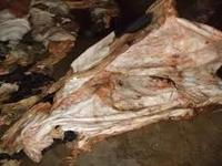 Dried and Raw Wet Salted Cattle Hides | Cow Skins /Buffalo Horns for Sale