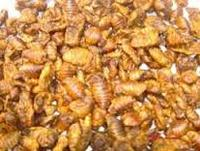 Silkworm pupae meal