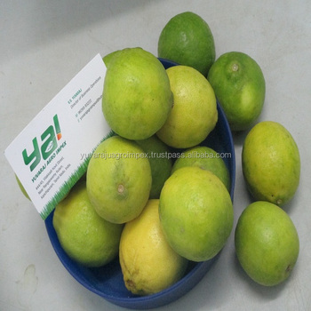 Lemon Importer In Dubai / Malaysia / Singapore / Vietnam / Thailand /  Maldives - Buy Farm Fresh Lemon Supplier In India,Green Lemon Manufacturers  From