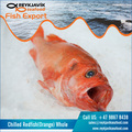 Frozen Redfish Orange Whole Chilled