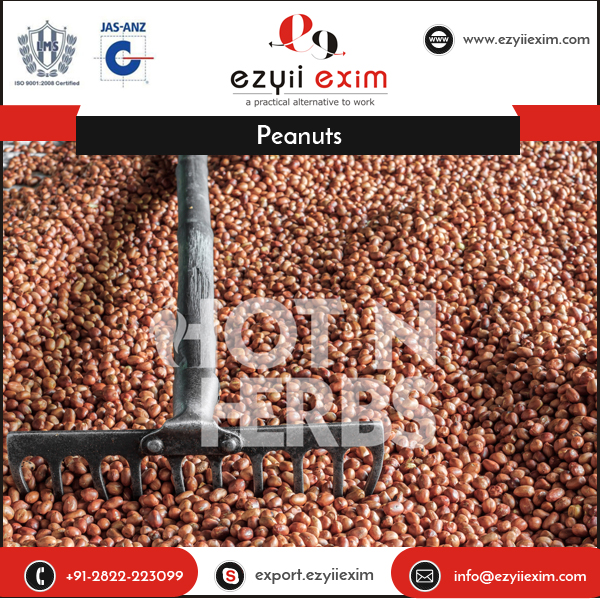 Excellent Quality Highly Nutritious Peanuts from Reputed Manufacturer