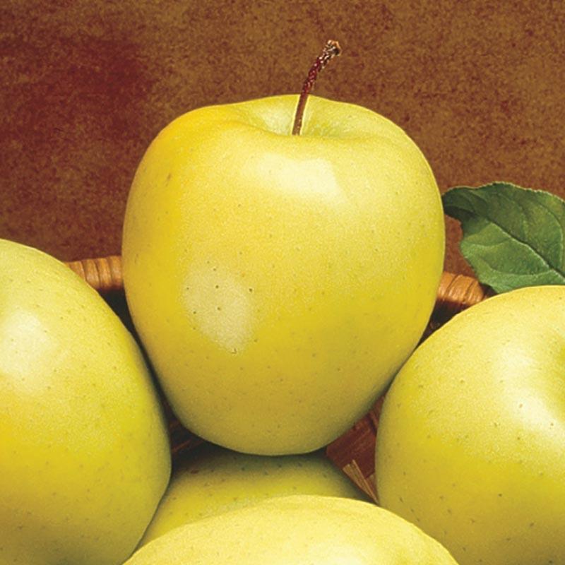 Яблоки голд для похудения