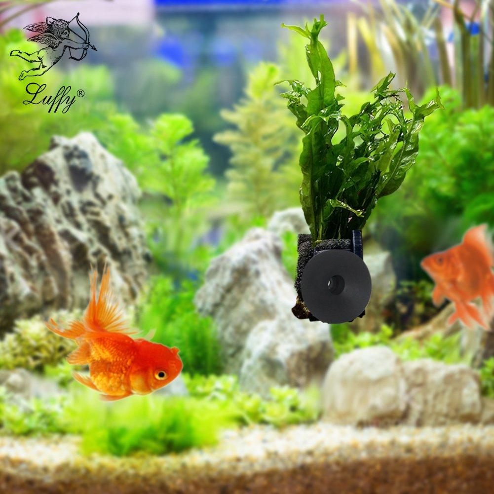 cheap live tropical aquarium plants find live tropical aquarium