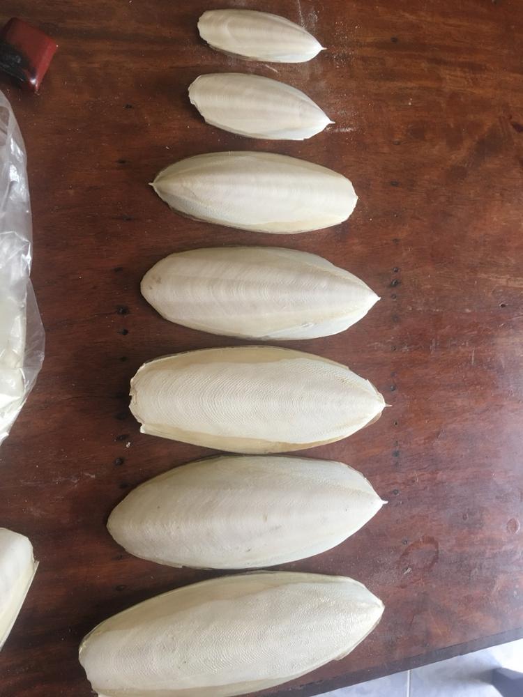 High quality dried cuttlefish bone for animal feeding