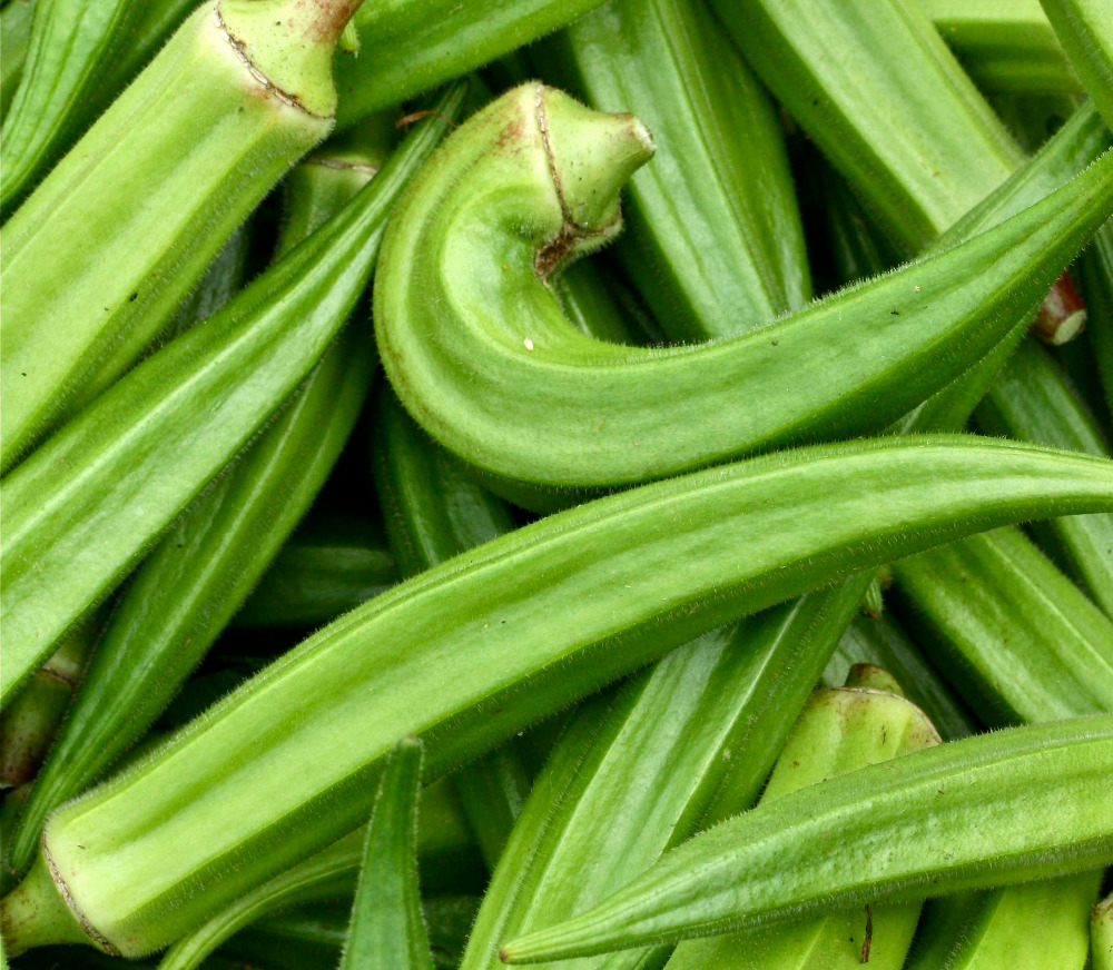 fresh okra for sale fresh okra for sale suppliers and at alibabacom - How To Freeze Fresh Okra
