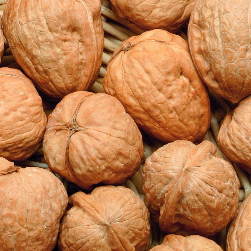 Quality Walnut for Sale Cheap price