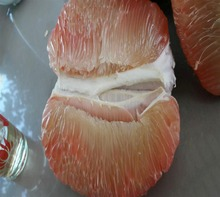 Rosa flesh <span class=keywords><strong>POMELO</strong></span>/+ 84963818434 whatsapp