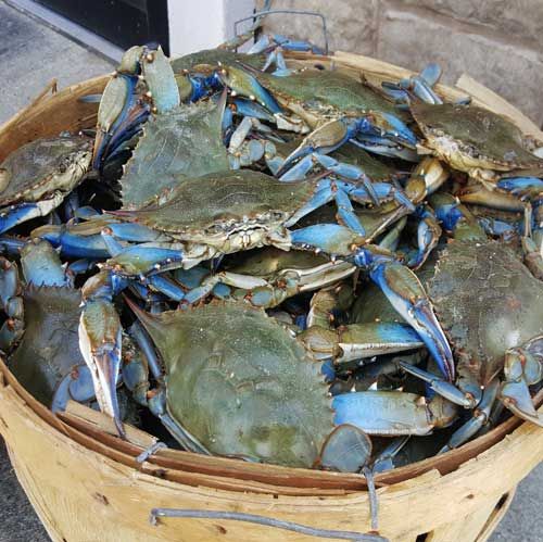 Canada Best Quality Grade A Live Blue Swimming Crab For Sale - Buy Frozen  Blue Crab Product on Alibaba com