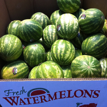 Fresh Cantaloupe Melons, Fresh Casaba Melons, Fresh Water Melons,Fresh Galia Melons, Fresh Honeydew Melons, Fresh Horned Melons