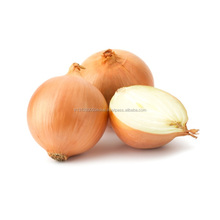Valenciana Onion Seeds High Quality Valencia Onion Seed Natural Delicious Vegetable Seeds Bunion Seed Prices