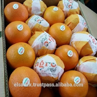 Navel Orange / Valencia Orange / Baladi Orange