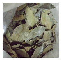 Wholesale Price Dried Soursop Leaf / Graviola / Guayabano - Natural Herbal Medicine